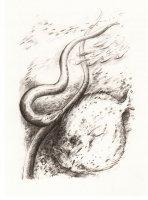 Die große Seeschlange 1